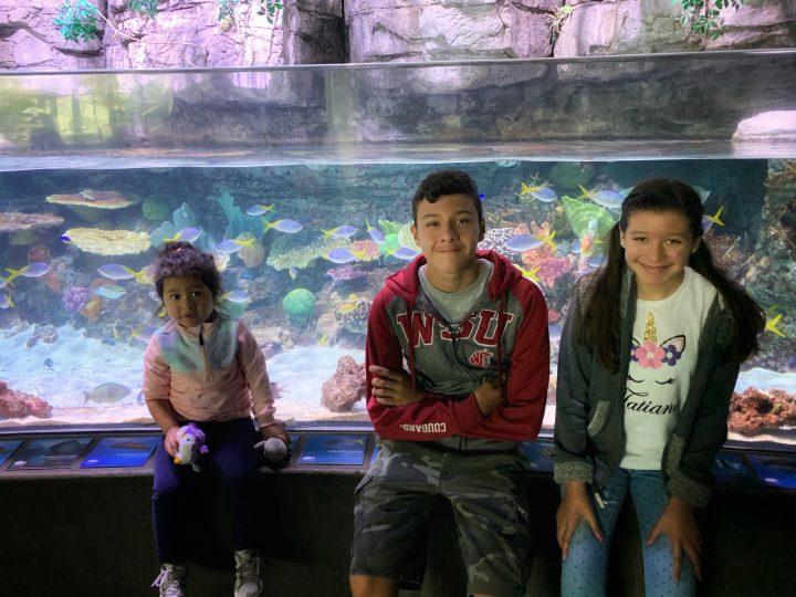Aquarium of the Pacific es una excelente opción para este verano